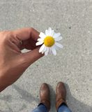 Un piccolo fiore bianco in mia mano immagine stock