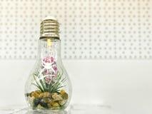 Un piccolo fiore organico verde della pianta si sviluppa dentro una lampadina di vetro Concetto: ecologia, protezione del pianeta fotografia stock libera da diritti