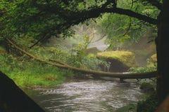 Un piccolo fiume con paesaggio nebbioso fotografia stock libera da diritti