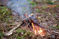Un piccolo fuoco nella foresta Fotografia Stock