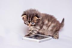 Un piccolo gattino è giocato da un telefono cellulare Communicatio mobile fotografia stock libera da diritti