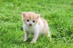 Un piccolo gattino all'aperto in erba verde Fotografia Stock