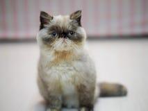 Un piccolo gattino che si siede sul pavimento Fotografia Stock Libera da Diritti