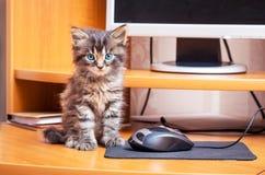 Un piccolo gattino irsuto a strisce con gli occhi azzurri si siede vicino ai comp. fotografia stock libera da diritti