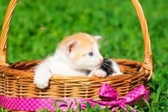 Un piccolo gattino rosso Fotografia Stock Libera da Diritti