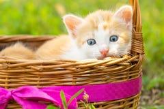 Un piccolo gattino rosso Fotografie Stock