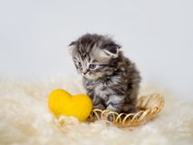 Un piccolo gattino si siede in un canestro con un cuore decorativo giallo Immagini Stock