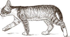 Un piccolo gattino sta camminando Fotografia Stock Libera da Diritti