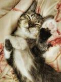 Un piccolo gatto fotografia stock