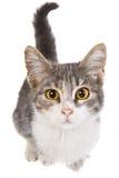 Un piccolo gatto Fotografie Stock