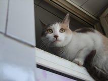 Un piccolo gatto bianco nero giallo fotografie stock libere da diritti