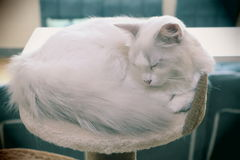 Un piccolo gatto di Snowy Immagini Stock