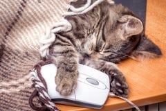 Un piccolo gatto dorme, abbracciando un mouse_ del computer fotografie stock