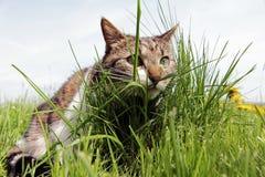 Un piccolo gatto sul nascondersi di caccia Immagine Stock