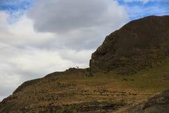 Un piccolo guanaco che posa come allerta nel parco nazionale di Torres del Paine Fotografia Stock Libera da Diritti