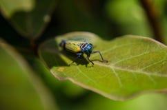 Un piccolo insetto in Machu Picchu fotografia stock libera da diritti