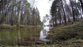 Un piccolo lago della foresta Il paesaggio pittoresco siberia stock footage