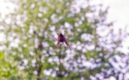 Un piccolo mazzo dei fiori bianchi fotografia stock