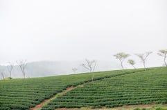 Un piccolo modo nell'azienda agricola del tè Fotografie Stock Libere da Diritti