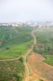Un piccolo modo nell'azienda agricola del tè Immagine Stock Libera da Diritti
