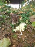 Un piccolo mouse Fotografie Stock Libere da Diritti