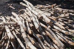 Un piccolo mucchio di collega la campagna, pila della legna da ardere immagine stock libera da diritti