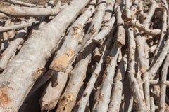 Un piccolo mucchio di collega la campagna, pila della legna da ardere fotografie stock