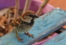 Un piccolo passero fotografia stock