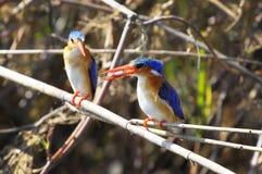 Un piccolo pesce per il pranzo Fotografie Stock Libere da Diritti
