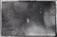 Un piccolo ragno Immagini Stock