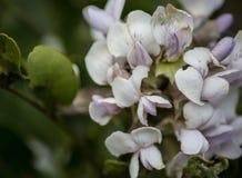Un piccolo ragno che si siede su un fiore fotografia stock libera da diritti