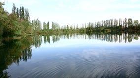 Un piccolo stagno circondato dagli alberi verdi archivi video