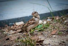 Un piccolo uccello Immagini Stock Libere da Diritti