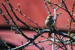 Un piccolo uccello Fotografie Stock Libere da Diritti