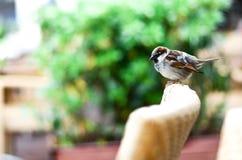 Un piccolo uccello Fotografie Stock