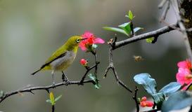 Un piccolo uccello Immagine Stock