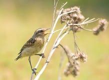 Un piccolo uccello che si siede su una filiale asciutta. Fotografie Stock