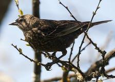 Un piccolo uccello marrone si siede sull'albero fotografia stock