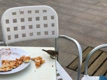 Un piccolo uccello, un passero mangia una pizza deliziosa da una tavola bianca in un caffè all'aperto sulla via Fotografia Stock