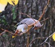 Un piccolo uccello su un ramo di albero Fotografia Stock