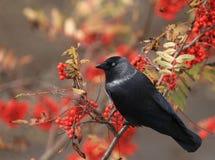 Un piccolo uccello un piccolo Immagini Stock
