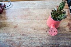 Un piccolo vaso della pianta visualizzato nella finestra Fotografia Stock