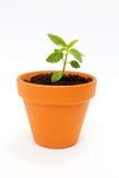 Un piccolo vaso di fiore e una pianta verde fotografia stock