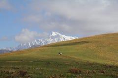 Un pico de la nieve con el prado en primero plano Fotografía de archivo