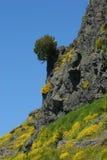 Un Pico in Madera Immagini Stock