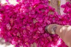 Un piede che fa un passo nella massa dei petali viola vivi della buganvillea Immagini Stock Libere da Diritti
