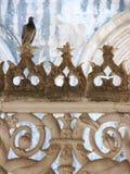 Un pigeon dans le cloître Photographie stock libre de droits