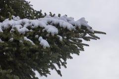 Un pin couvert de neige au parc de Hangang, Séoul, Corée du Sud photographie stock