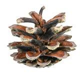 Un pinecone Fotografía de archivo libre de regalías