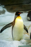 Un pingouin Photographie stock libre de droits